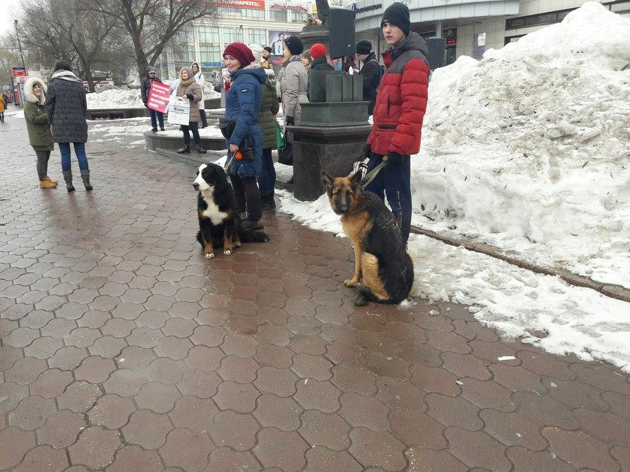 В Перми прошел митинг в защиту животных - фото 4