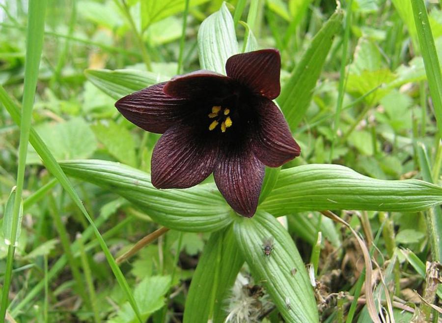 В Соликамском ботаническом саду появились редкие растения