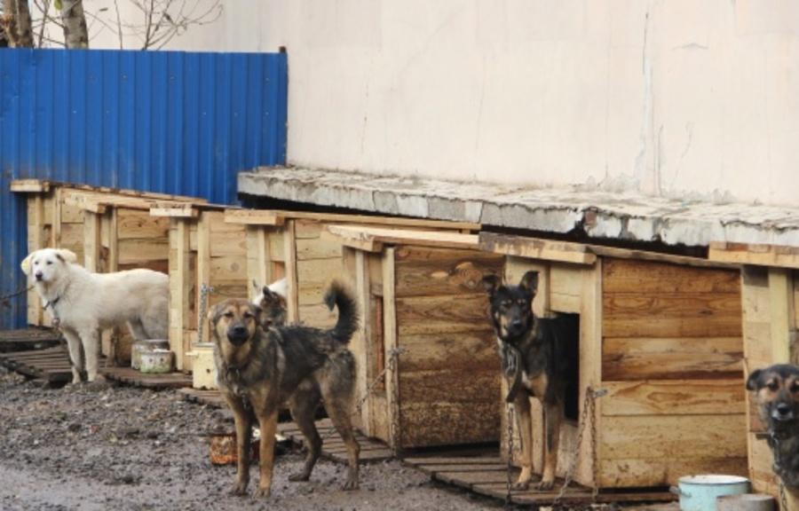 В морозы собаки из приюта получают усиленное питание