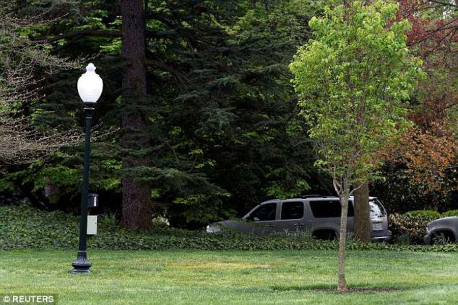 В Вашингтоне пропал дуб Трампа и Макрона - фото 1