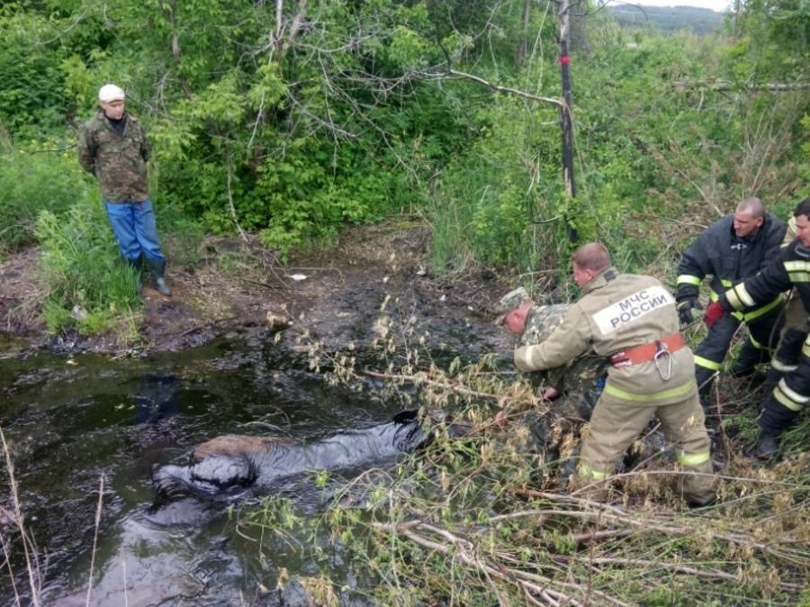 В Пермском крае пожарные спасли лося из ямы с маслом - фото 1