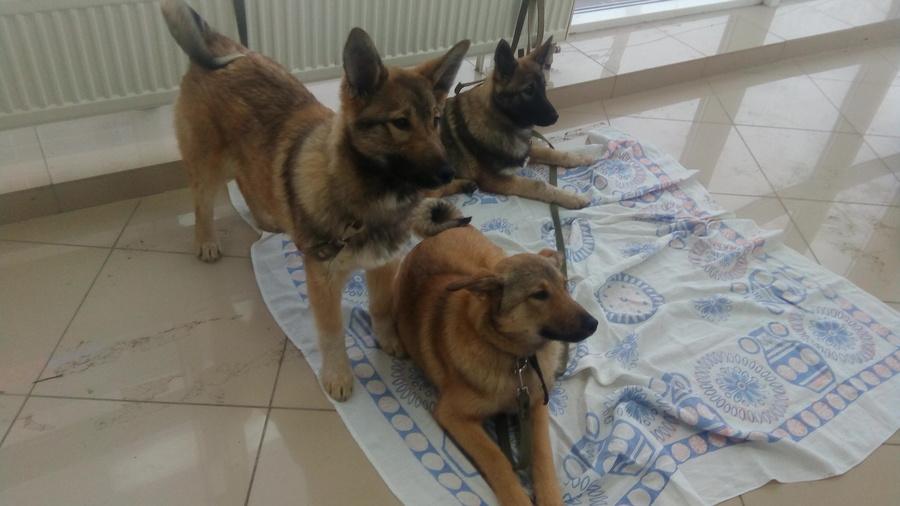 В Перми на благотворительном фестивале раздают животных из приютов
