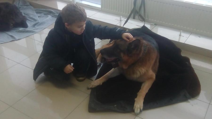 В Перми на благотворительном фестивале раздают животных из приютов - фото 3