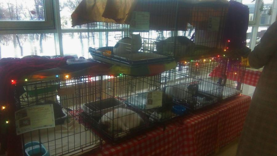 В Перми на благотворительном фестивале раздают животных из приютов - фото 6