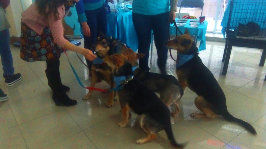 В Перми на благотворительном фестивале раздают животных из приютов - фото 8