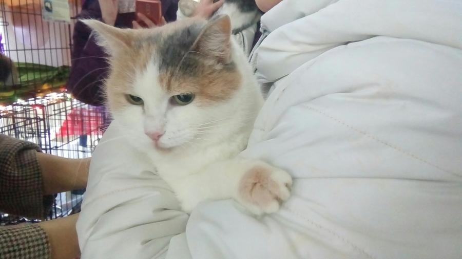 В Перми на благотворительном фестивале раздают животных из приютов - фото 9