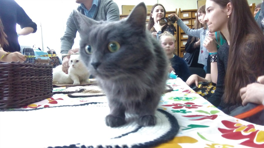 В краевой библиотеке прошла акция с тремя котами