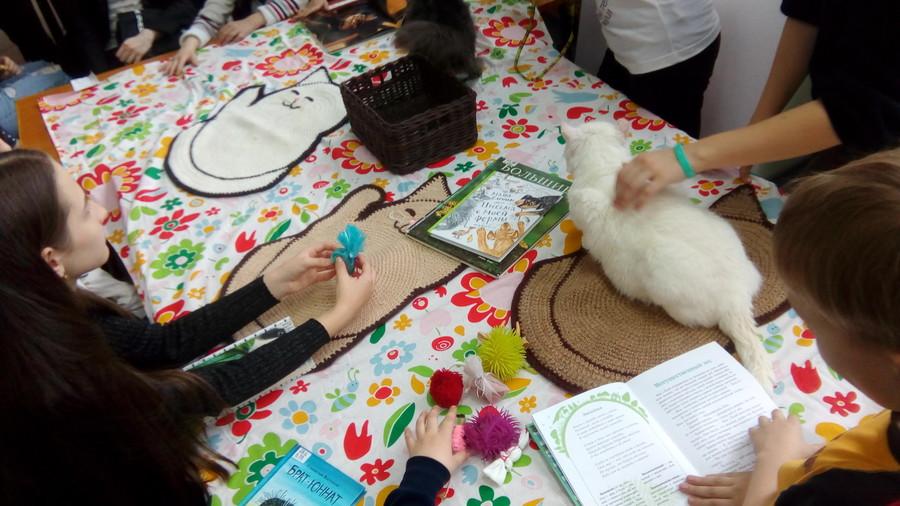 В краевой библиотеке прошла акция с тремя котами - фото 3