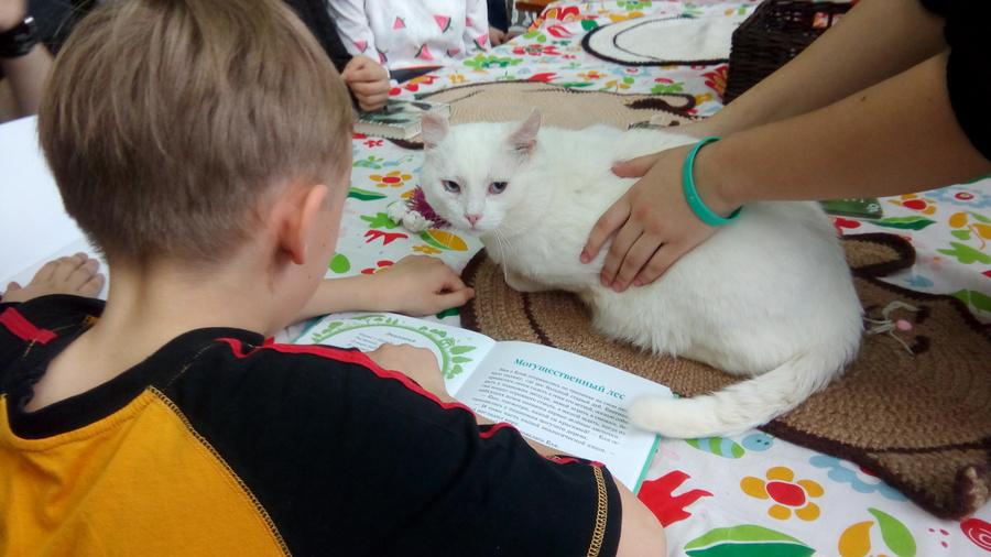 В краевой библиотеке прошла акция с тремя котами - фото 5