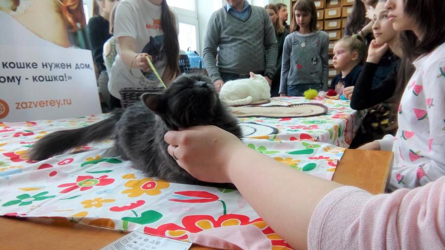В краевой библиотеке прошла акция с тремя котами - фото 6
